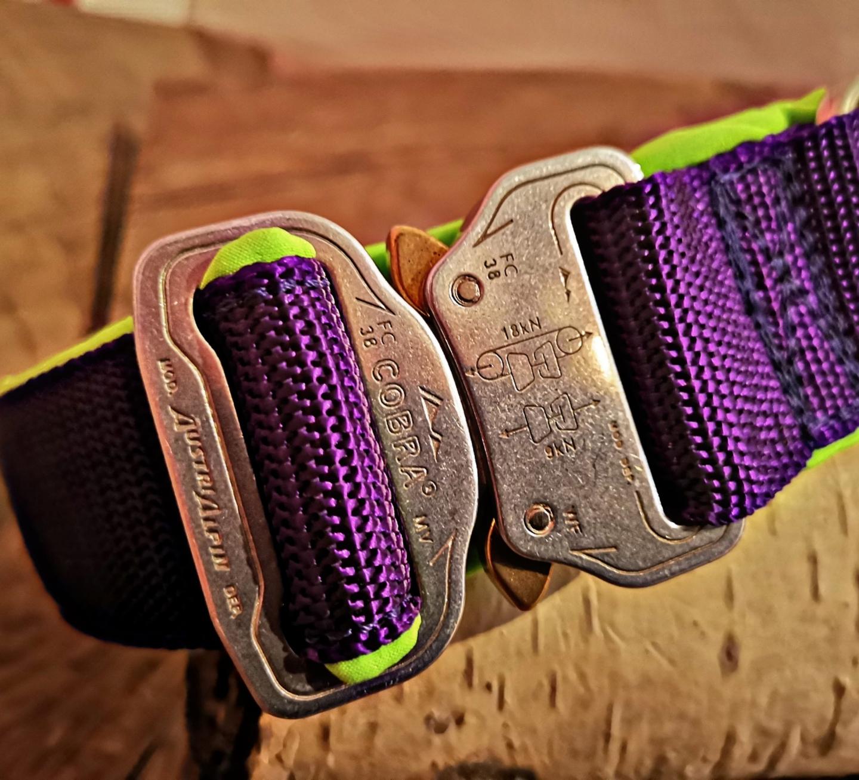 Cobra Schnalle silber, Halsband lila, neongrün unterlegt