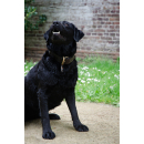 Spotted! Dog Hundemarke QR-Code