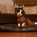 Hundebademantel Dryup Cape MINI braun 40 cm
