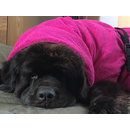 Hundebademantel Dryup Cape BIG 4XL PINK